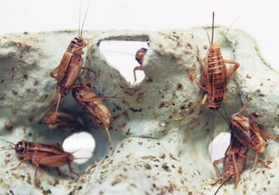hyönteiset